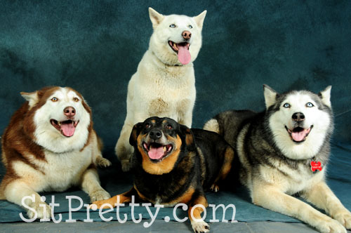 Beautiful group of dogs