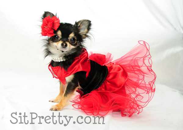 Bebe - Contestant in the barking beauty
